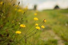 Bloemen op de weg Stock Fotografie