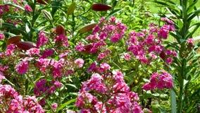 Bloemen op de weide stock video