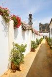 Bloemen op de witte straten Stock Afbeelding
