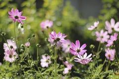 Bloemen op een bed Stock Afbeelding