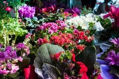 Bloemen op een Bloemist Stock Afbeeldingen