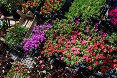 Bloemen op een Bloemist Royalty-vrije Stock Afbeeldingen