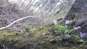 Bloemen op een boom stock foto