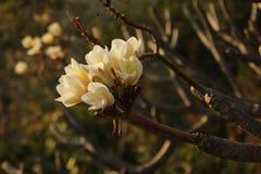 Bloemen op een boom royalty-vrije stock foto's