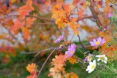 Bloemen op een de herfstachtergrond Stock Afbeelding