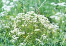 Bloemen op een gebied Royalty-vrije Stock Afbeelding