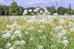 Bloemen op een gebied Stock Afbeeldingen
