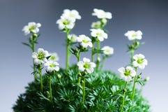 Bloemen op een gradiënt blauwe achtergrond Royalty-vrije Stock Afbeelding