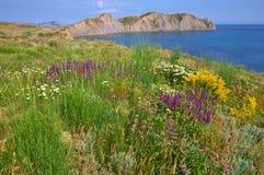 Bloemen op een groen plateau.   Royalty-vrije Stock Afbeeldingen