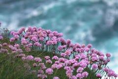 Bloemen op een klip. Stock Afbeelding