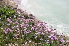 Bloemen op een klippenrand Stock Afbeeldingen