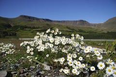 Bloemen op een land Royalty-vrije Stock Afbeeldingen
