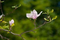 Bloemen, op een vage groene achtergrond Stock Foto's