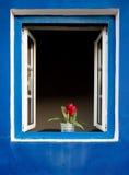 Bloemen op een venster Royalty-vrije Stock Foto