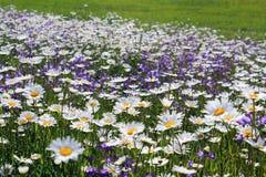 Bloemen op een weide Stock Afbeelding