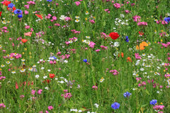 Bloemen op een weide stock afbeeldingen