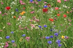 Bloemen op een weide stock fotografie