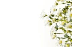 Bloemen op een witte achtergrond Stock Foto's