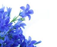 Bloemen op een witte achtergrond, donkerblauwe handklok Stock Fotografie