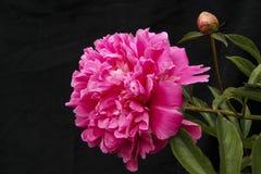Bloemen op een zwarte achtergrond Royalty-vrije Stock Foto's