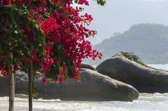 Bloemen op eiland van kaal Royalty-vrije Stock Foto