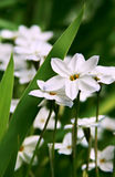Bloemen op groen gazon stock foto's