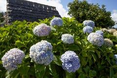 Bloemen op het Eiland Madera Royalty-vrije Stock Afbeeldingen