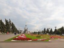 Bloemen op het gazon en de mensengang Royalty-vrije Stock Fotografie