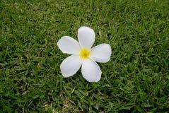 Bloemen op het gebied Stock Foto