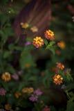 Bloemen op het gebied royalty-vrije stock foto