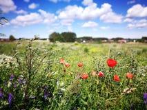 Bloemen op het gebied Artistiek kijk in uitstekende levendige kleuren Royalty-vrije Stock Afbeelding
