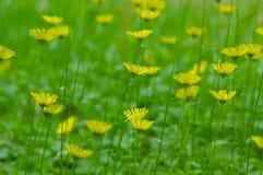 Bloemen op het groene gebied Royalty-vrije Stock Afbeelding