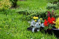 Bloemen op het planten worden voorbereid die Royalty-vrije Stock Fotografie