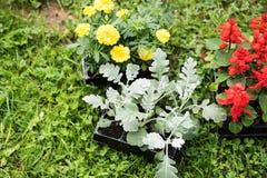 Bloemen op het planten worden voorbereid die Royalty-vrije Stock Afbeeldingen