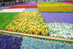 Bloemen op het Rode Vierkant Royalty-vrije Stock Fotografie