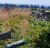 Bloemen op het Slagveld Stock Afbeeldingen