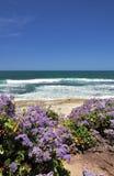 Bloemen op het strand stock foto