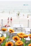 Bloemen op het strand, Stock Afbeelding
