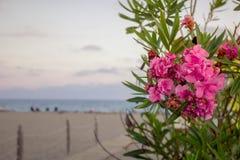 Bloemen op het Strand Stock Fotografie