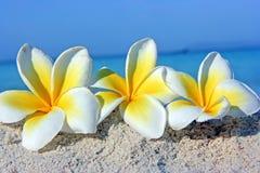 Bloemen op het strand Stock Afbeelding