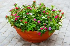 Bloemen op het terras Stock Afbeeldingen