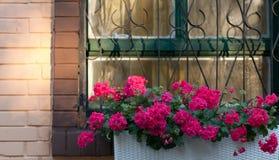 Bloemen op het venster Stock Afbeeldingen