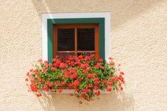 Bloemen op het venster Stock Fotografie