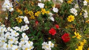 Bloemen op mijn voorportiek Royalty-vrije Stock Afbeelding