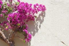 Bloemen op muur Royalty-vrije Stock Afbeelding