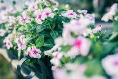 Bloemen op oude houten bruggen royalty-vrije stock foto