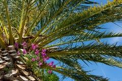 Bloemen op palm Stock Afbeeldingen