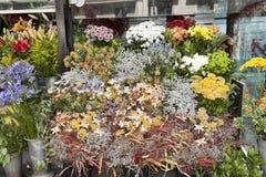 Bloemen op Rambla Boulevard Het verkoopt hier altijd vele bloemen Stock Afbeeldingen