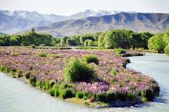 Bloemen op rivierbed Stock Fotografie