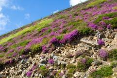 bloemen op rots Royalty-vrije Stock Afbeelding
